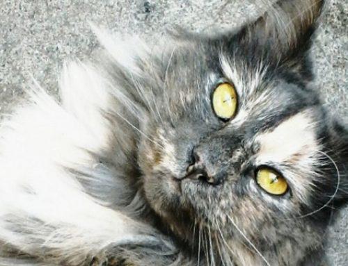 MSD investit 38 millions d'euros pour produire des antiparasitaires pour chiens et chats