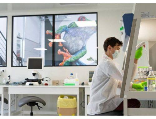 TreeFrog Therapeutics : 2 millions d'euros pour industrialiser la production de cellules souches